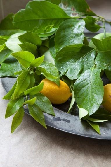 Leaves and lemons