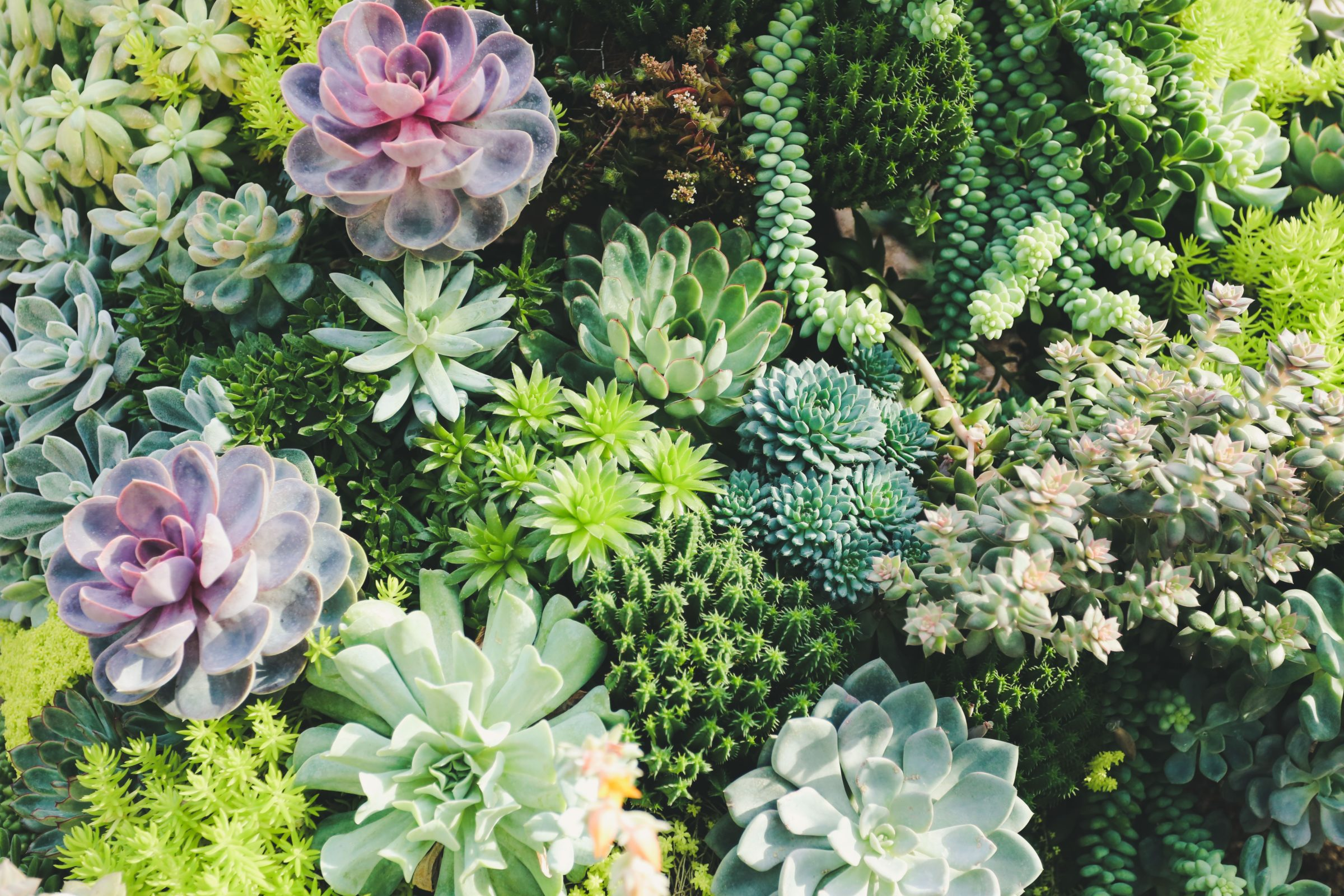 So You Bought A Succulent Now Here S How To Care For It