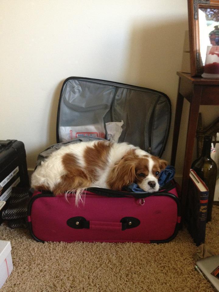 Dog travel 1