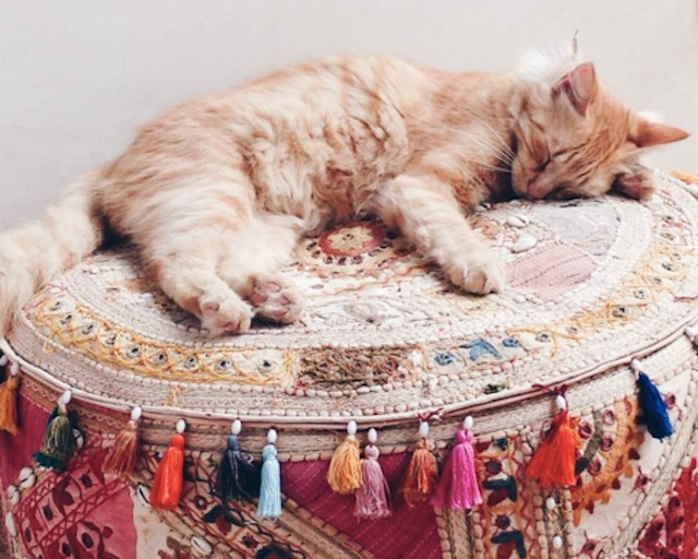 Fritzi the resident cat lays his head in style at Riad Mena & Beyond.