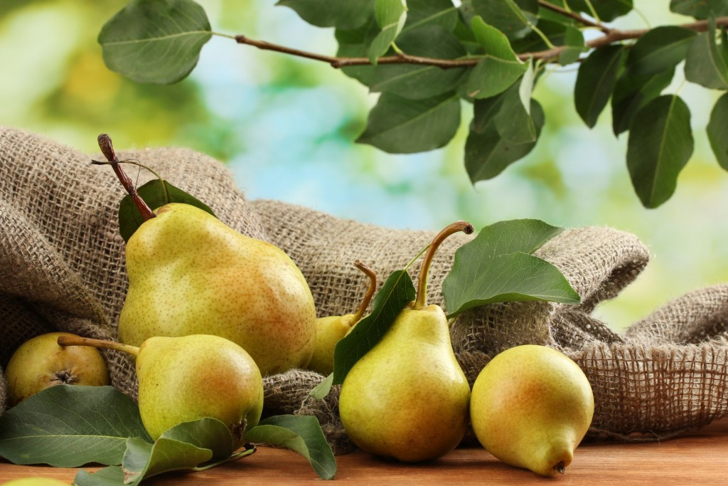 Pears could be the answer to our hangover cure prayers.