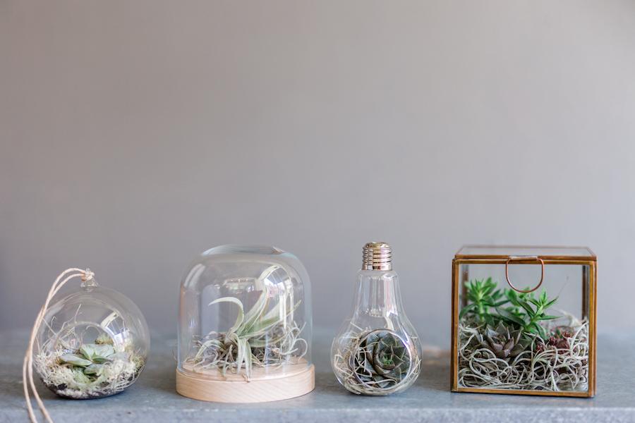 Terrific terrarium containers