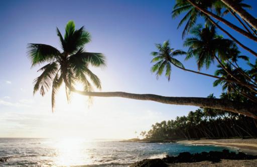 Sun shining off water and through palm tree at Return to Paradise Beach, Upolu, Samoa, Pacific