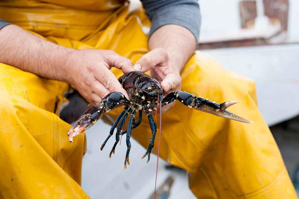 web-19-Lobster-lesson_ballynahinch