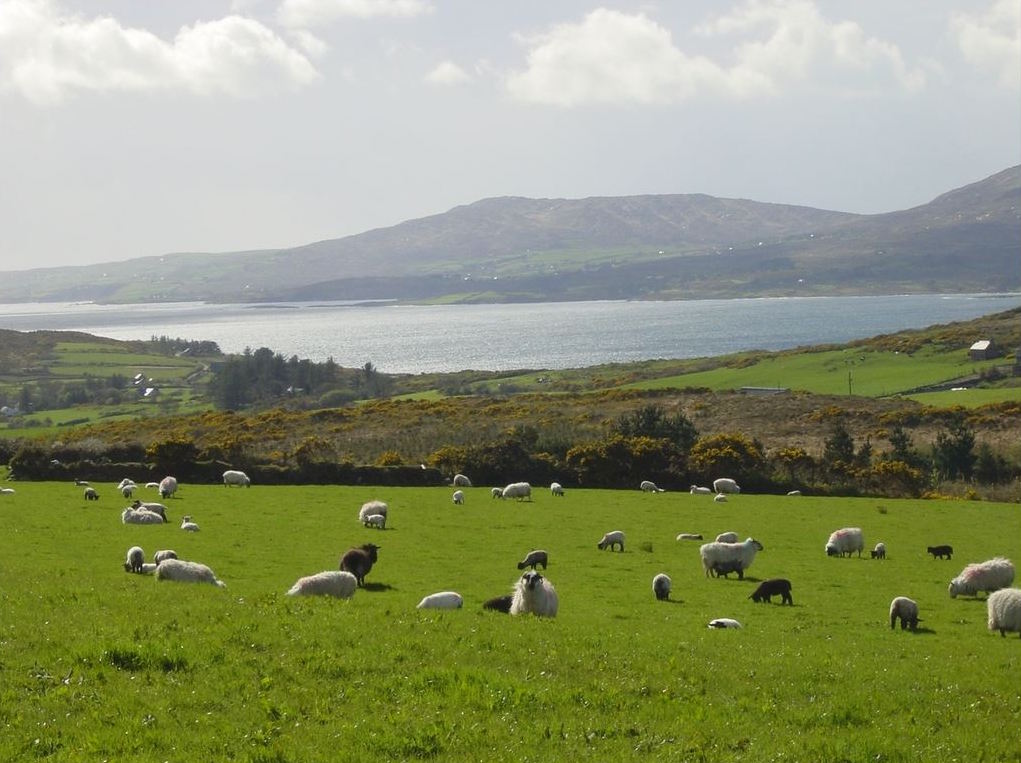 Durras, West Cork