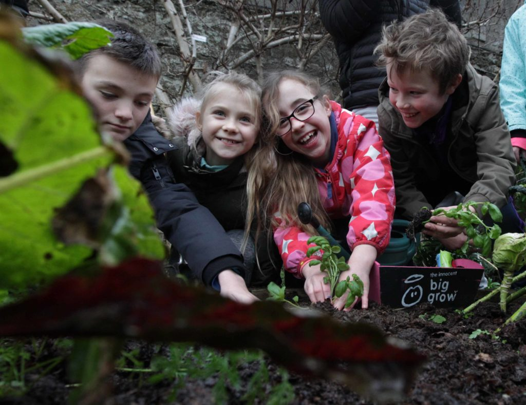 growing vegetables with kids