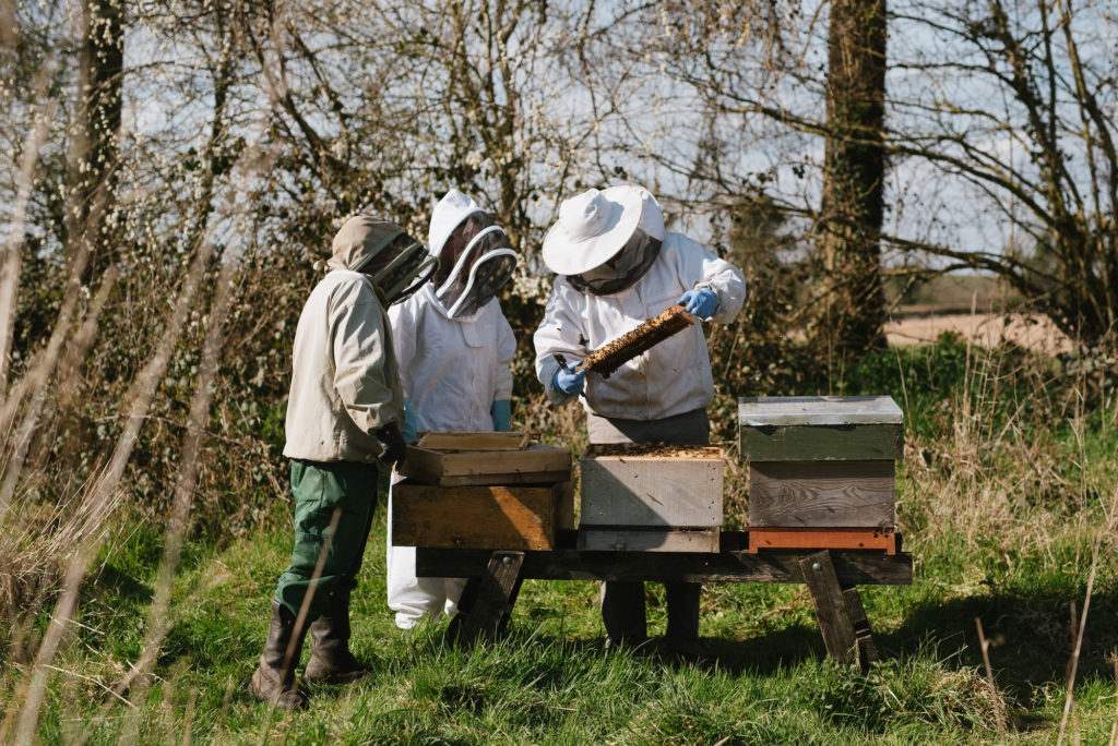 Millbee Ruth Connolly honey bee