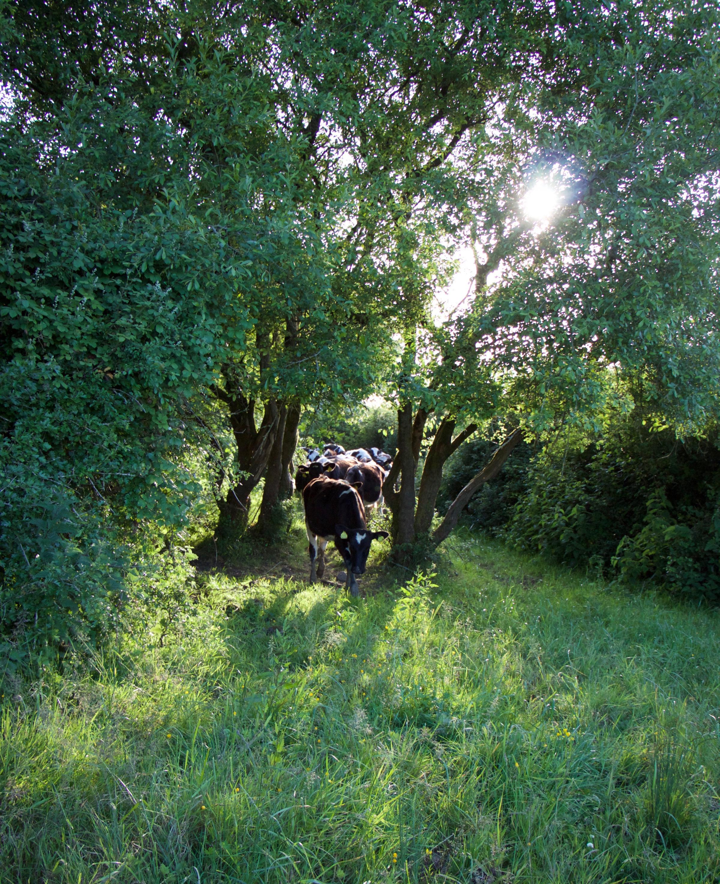 Irish farm life