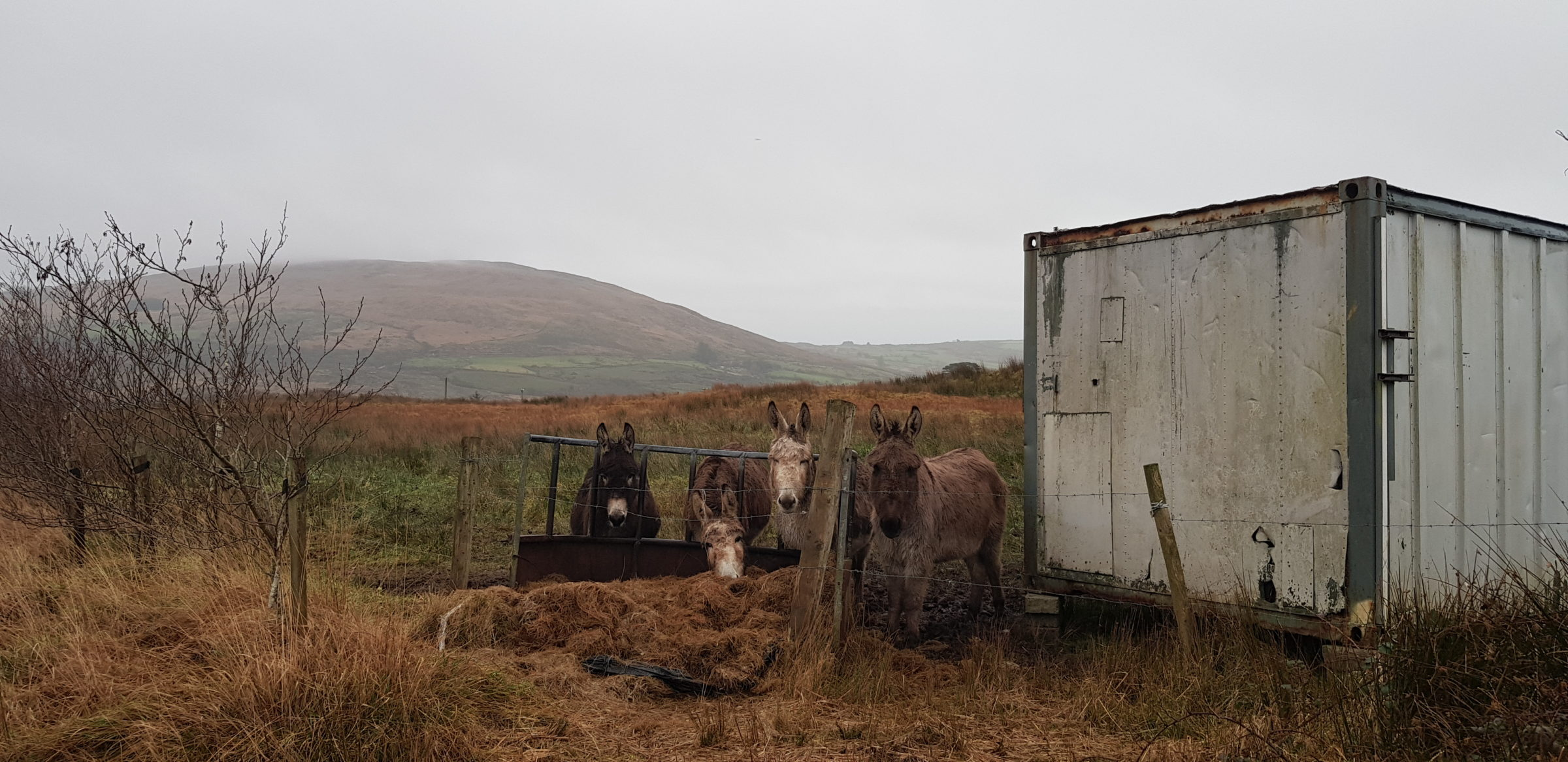 Local donkeys Liadain Aiken